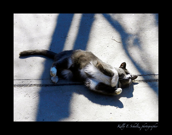 Montreal Cat