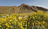 Anza-Borrego State Park, CA