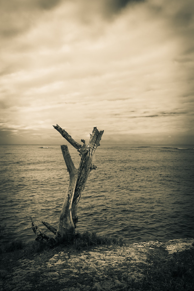 Lonely Tree Near is Death