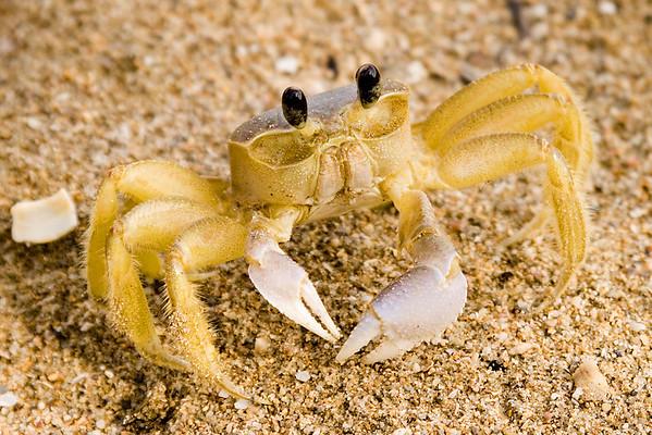 Crab on beach, San Juan, Puerto Rico