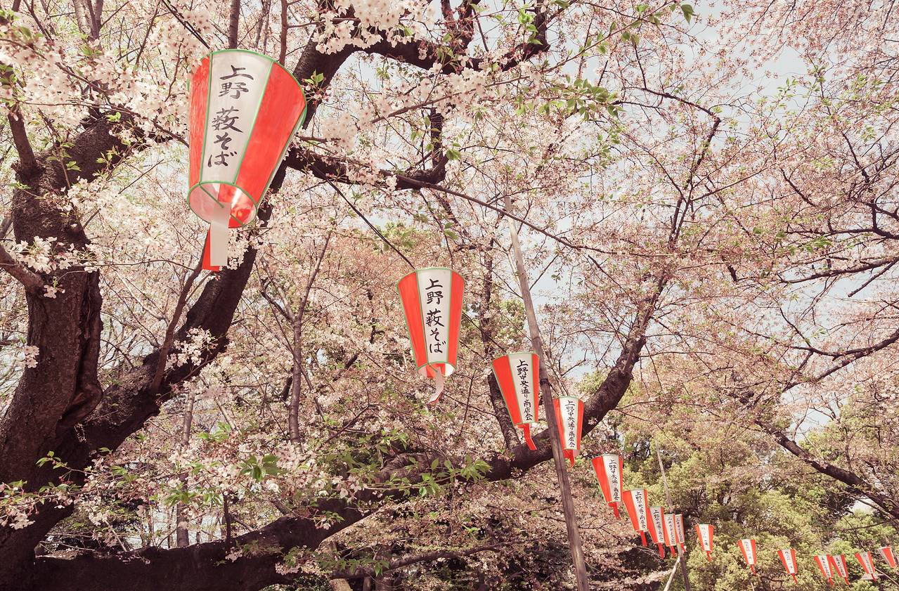 Lanterns on Display for Sakura