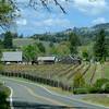 Napa Sonoma vinyard, Anderson Valley