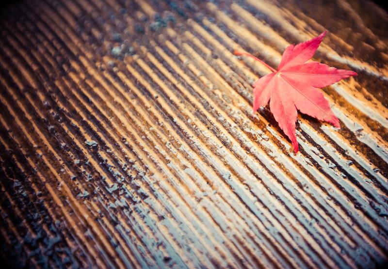 Red Japanese Maple Leaf at Tenryu-ji