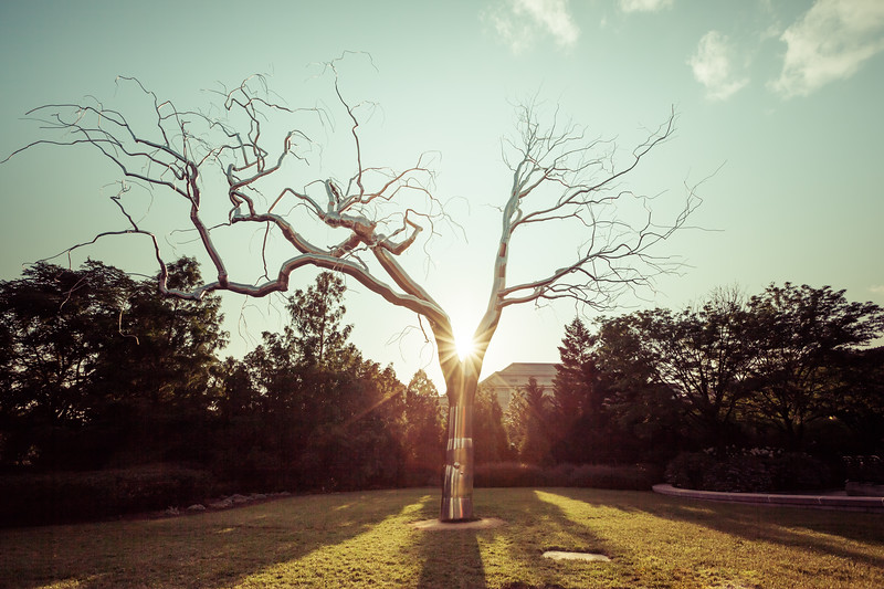 Image of a Tree in the Sun