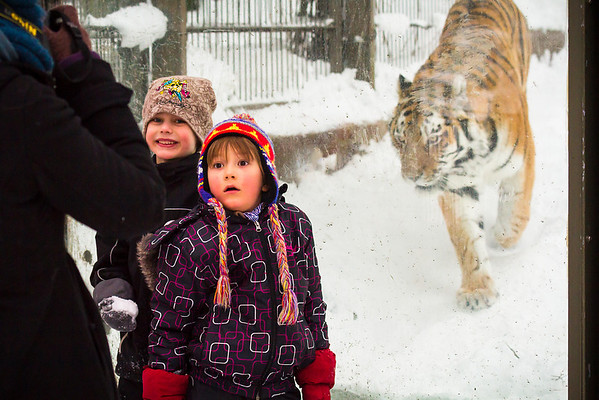 These children pose for mom with the tiger in the background. One with a big smile and a snowball, the other with the realization that the tiger is starring at them very intently. Taken at the Helsinki Zoo.