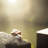 The Snail that Said Slow Down