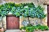 Viney Doorway