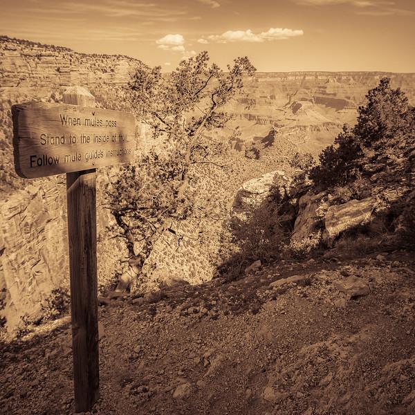 When Mules Pass, Grand Canyon