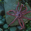 A stranded starfish that didn't survive the tide.