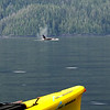 Orcas close to our kayak.  Breathtaking.