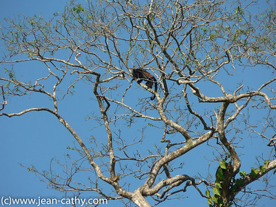 Costa Rica 2007_ (35 of 85)