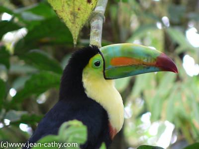 Costa Rica 2007_ (62 of 85)