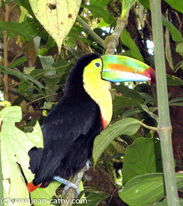 Costa Rica 2007_ (83 of 85)