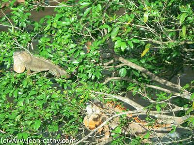 Costa Rica 2007_ (56 of 85)