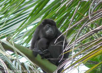 Costa Rica 2007_ (72 of 85)