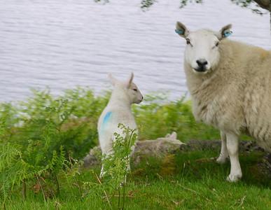Scotland (2014)