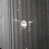 Pigeon at Miami Airport