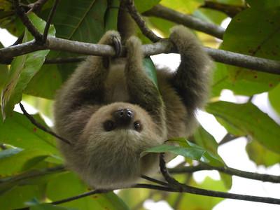 Costa Rica (2010)