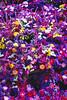 Carnac_Flowers