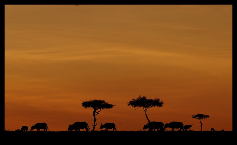 On the Move, Mara North Conservancy, Kenya, 2009