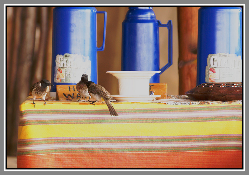 Service Please!<br /> <br /> Service was a bit slack at times and these birds are wondering just how long they'll have to wait until someone forgets to cover the bread or the sugar. Don't worry guys, it won't be too long ;-) Coffee here was awful... no other word for it.
