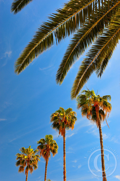 California Spires<br /> <br /> Quintessential Southern California. <br /> <br /> <br /> Ago vita vos somnium (live the life you dream)