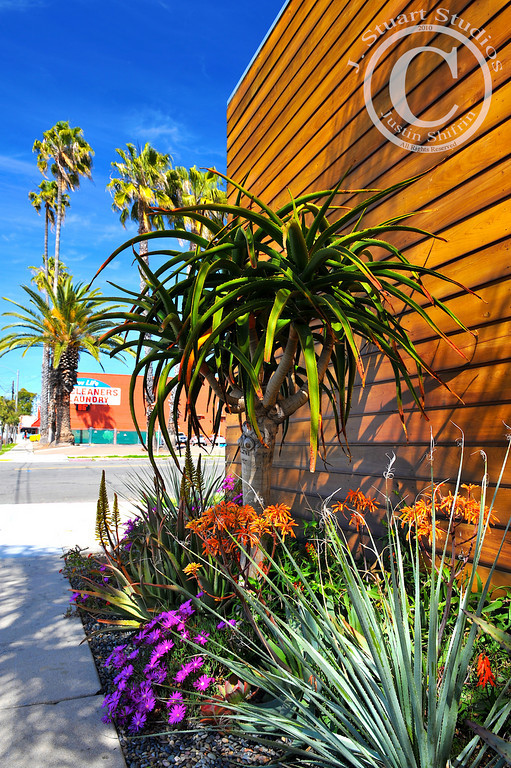 "Urban Oasis<br /> <br /> Earlier this week I visited a real oasis in Southern California.  That experience got me to think about urban oases that I have witnessed.  We have all seen them, but so often these are fleeting moments that are quickly forgotten.  As a photographer and nature-lover, I incessantly observe my surroundings and record mental images and maps of my environment.  <br /> <br /> Back in March I walked around San Diego and found this interesting ""urban oasis"" on a lovely street corner.  We all know that walking through a city is the best way to learn of your surroundings, but most, including myself, seldom explore our cities.  We go through life buzzing to work, eating lunch hurriedly, restarting work, and then retreating home only to repeat the process the following day.  During the workday I enjoy taking my sandwich out for a walk and exploring.<br /> <br /> In March 2010 I stumbled across an excellent ""urban oasis"" (pictured above).  The plants are eclectic, yet perfect.  I stopped my journey and enjoyed these plantings for a few minutes.  The palm trees and blue sky in the background are not only quintessential San Diego, but also nicely complement the foreground.<br /> <br /> When I travel to a new city, the first thing I yearn to do is ""get lost"" by walking back-alleys and wandering aimlessly.  It is hard to motivate oneself to do this in your own backyard, but on this occasion my efforts are fruitful.   <br /> <br /> April 30, 2010"