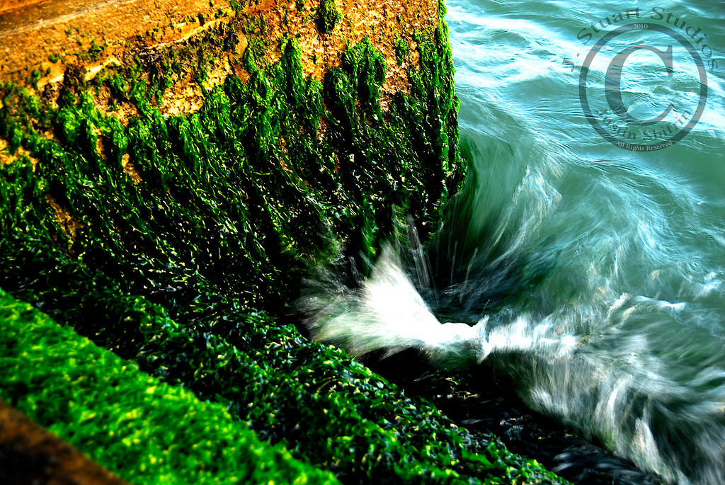 "Venetian Algae Swirl<br /> <br /> Venice is a wonderful place to visit.  Most people gawk at the ornately adorned buildings that are precariously perched at the water's edge.  Some enjoy exploring the canals and walkways that dissect Venetian neighborhoods.  Others are enthralled with the bustling marketplaces.  Nearly all people visiting Venice have one thing in common, they look up a majority of the time and neglect to appreciate the water that makes Venice's ""streets"" so romantic.<br /> <br /> This image captures one of the often overlooked necessities, steps into the lagoon.  Without such steps, disembarking from watercraft would be difficult, if not impossible.  I exposed this photograph along the Grand Canal as the sun set on a day filled with memories.  I was drawn to these algae-covered stairs that were in front of an empty building.  The beautiful green algae intermixing with the lagoon's turquoise tides is fixed in my mind.  <br /> <br /> So much of the lagoon's waterfront is heavily trafficked in the tourist areas, but getting outside of one's comfort zone is the best recipe for interesting compositions.     <br /> <br /> April 18, 2010"