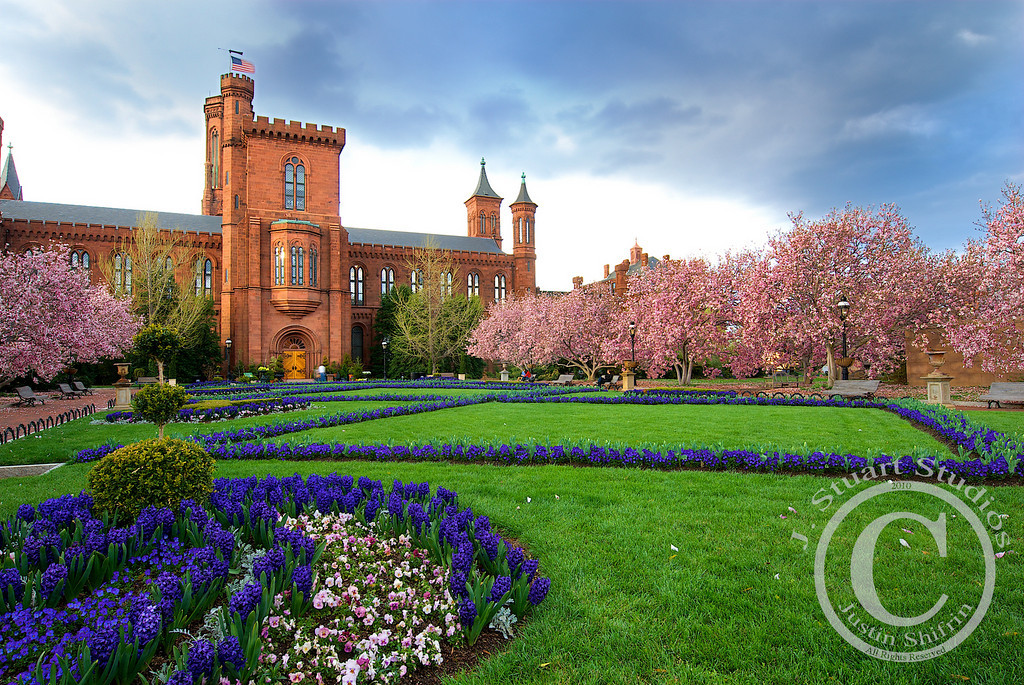 Rushing clouds + Pink blossoms + Purple buds + Green grass + Castle = My view of Washington D.C.<br /> <br /> March 31, 2010
