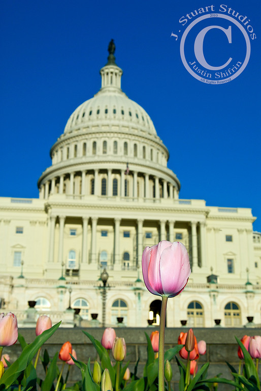 "Capitol Tulips  The health care bill passed the United States House of Representatives this evening, 219-212.  No matter your political persuasion, beliefs on America's ability to pay for the new health care mandates, expectations of how much better life will be for our fellow citizens, or your thoughts on how sausage is made, this image illustrates the United States' perpetual growth.  Today, America did change, whether the change is positive remains to be seen.  As an American, the <i>transparent</i> political process is often difficult to access and is often shrouded in secrecy with closed-door sessions.  Sometimes secrecy is necessary.  However, as an American, I enjoy being part of the process although I am not a politician, aide, or lobbyist.  Without my vote, <b>your vote</b>, politicians would not have a seat at the table.  Without our consent, politicians could not cast votes on our behalf.  Normally I feel removed from the legislative process.  Today's events were particularly interesting for me.  I followed the debate via CSPAN, cable news channels, my mobile phone while at a college baseball game, and through a ""live"" blog covering tonight's vote.  Today I felt like I was a passive participant, able to see the action, but without any way to affect change I sought.  I voted for my Representative in the last election, wrote letters to Congressmen/Congresswomen across the country, and made telephone calls expressing my views on the issue of this health care bill.  Despite taking an active role in the process, today is the first time I have felt like the political process was at least partly accessible.  If nothing else, this is progress.  The access I experienced today was not provided by the elected officials.  Journalists provided access to the story that some of us outside of Washington D.C. yearned for.  I want to thank all of the journalists that rapidly disseminated information on today's events.    Sunday, March 21, 2010"