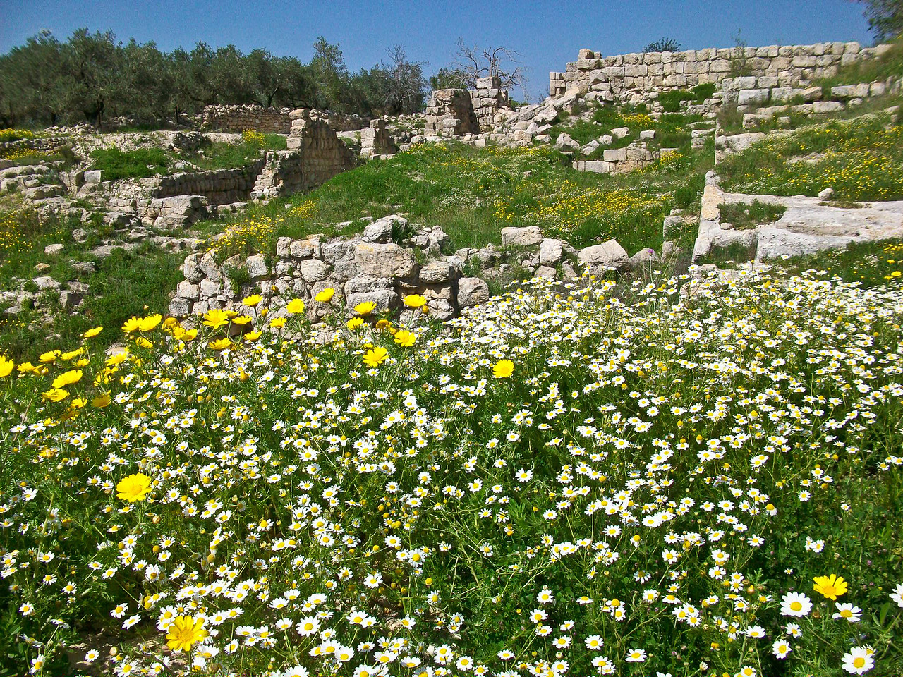Roman ruins in the flowers