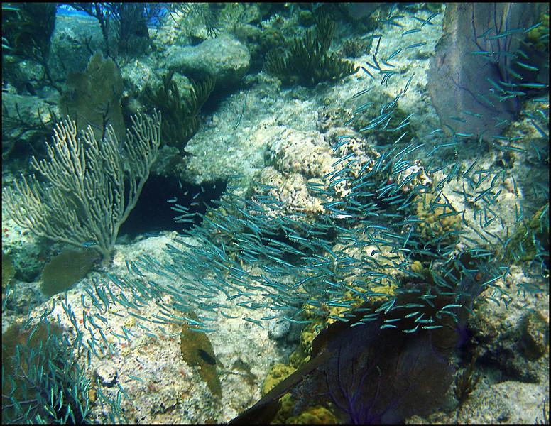 Beneath Trunk Bay, St. John, US Virgin Islands