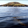 Dolphins approaching Coronado Island in the Sea of Cortez, Baja California, Mexico