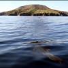 Dolphins approaching Coronado Island in the Sea of Cortez, Baja California, Mexico