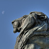 Moonbathing Lion, Statue at the base of the US Grant Memorial, in front of the Capitol Building, Washington, DC