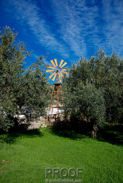 Windmill Between the Olive Trees in Lindos Greece