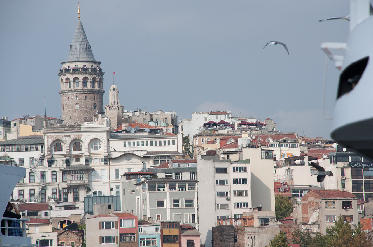 Galata Tower and Sea Gull.