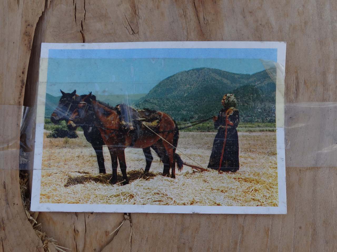 Here's the answer. The hard boards are found, softened, bent up at the front; hard, flint-like rocks are pounded in; attached to horses, stand on it for weight and it is a thresher of wheat. <br /> <br /> Our hotel host, Mustafa, said he has fine memories of his grandfather putting him on the thresher and dragging him over the wheat.
