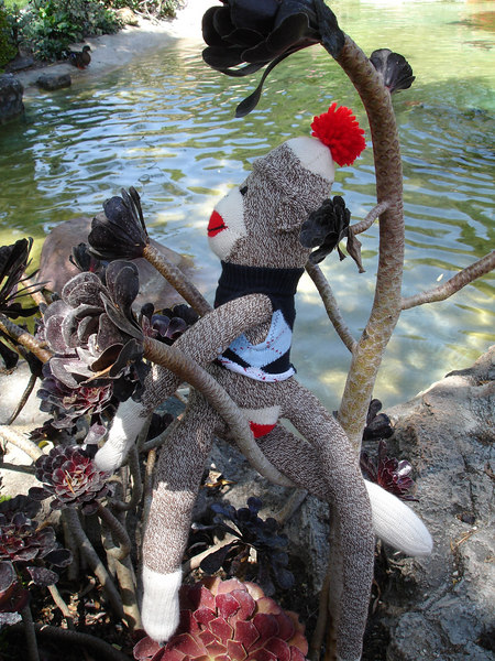 Sock Monkey takes a breather from the long lines to enjoy Disneyland's flora and fauna.