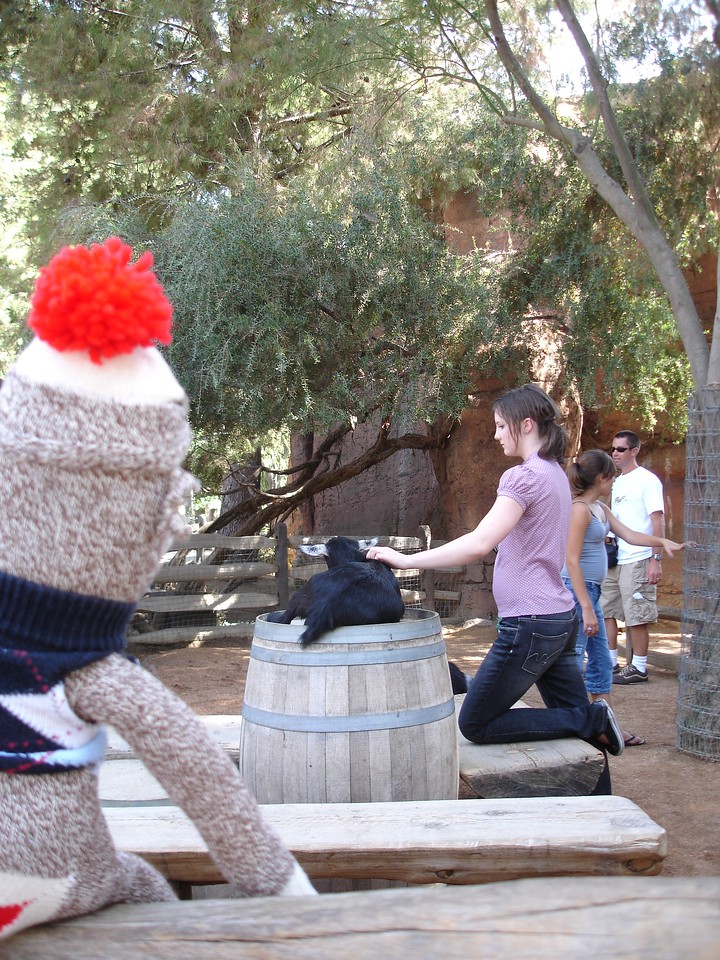 Sock Monkey watches Chelsea petting a goat at the Frontierland petting zoo.