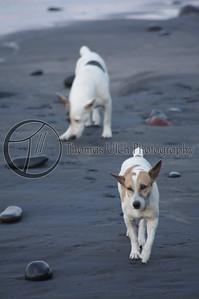 Beach dogs. El Tunco, El Salvador.