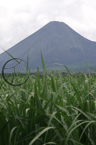 El Volcan de Izalco rodeado de cañaverales. Sugar cane in the foreground and the Izalco volcano in the background. Very Salvadoran! Izalco, Sonsonate, El Salvador.