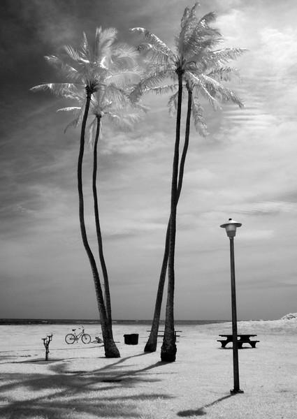Paradise-ical