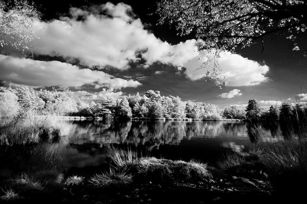 Elstead Pond