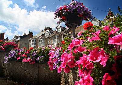 flowers of St.Ives, England