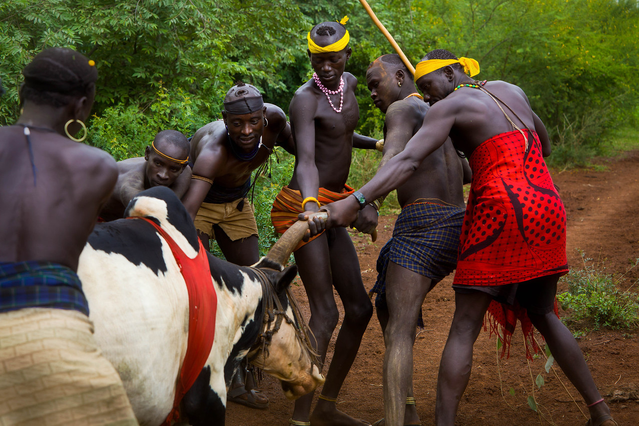 Bodi Oxen Sacrifice ceremony