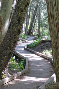 Make a path through the trees without ruining the trees.