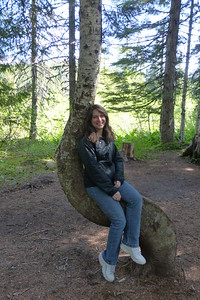 A Tree Chair