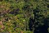 Amazonian parrots