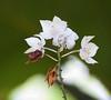 orchid_Tob110